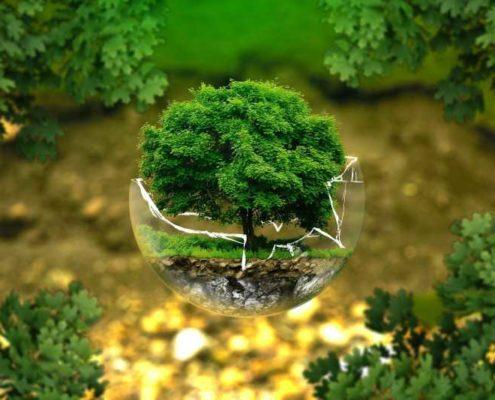 certificar productos ecologicos