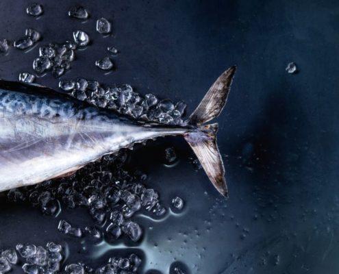Pescados que contienen mercurio